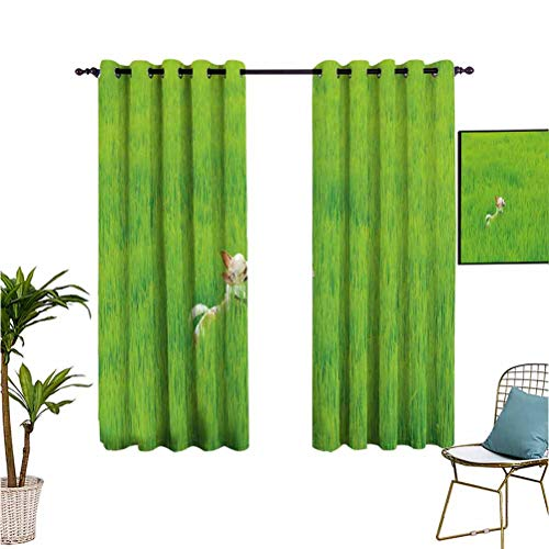 "Nature Insulated grommet blackout curtain Playful Chihuahua Puppy Dog in the Grass Cute Animal Pet Best Friend Picture Thermal Insulated Blackout Patio Door Curtain Panel W55""x L63"" Fern Green Cream"