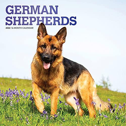 German Shepherds 2022 Wall Calendar Square FOIL (ジャーマン・シェパード・カレンダー)