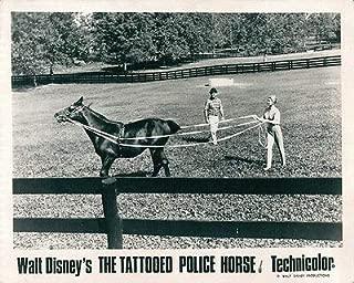 Walt Disney's The Tattooed Police Horse Original Lobby Card Horse in Training