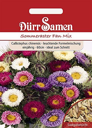 Dürr-Samen - 120 x Sommeraster Fan Mix Gelb Saatgut für Balkon, Garten & Hochbeet - Mischung Schnittblumen Samen 60 cm einjährig - Sommer-Astern Blumensamen Saat für zum Pflanzen