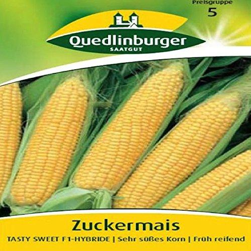Tasty Maïs F1 Sweet |-hybride | très Mignon Grain | früh reifend (zea mays) -