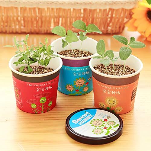 Catkoo Samen,Nelke/Lavendel Mini Topfpflanze Bonsai DIY Landschaft Home Office Decor Passende Küche, Wohnzimmer, Gartendekoration,Halloween,Weihnachts Dekoration Lavender^