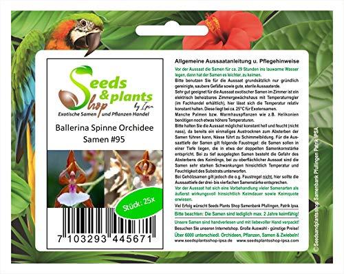 Stk - 25x Ballerina Spinne Orchidee Blumen Pflanzen - Samen #95 - Seeds Plants Shop Samenbank Pfullingen Patrik Ipsa