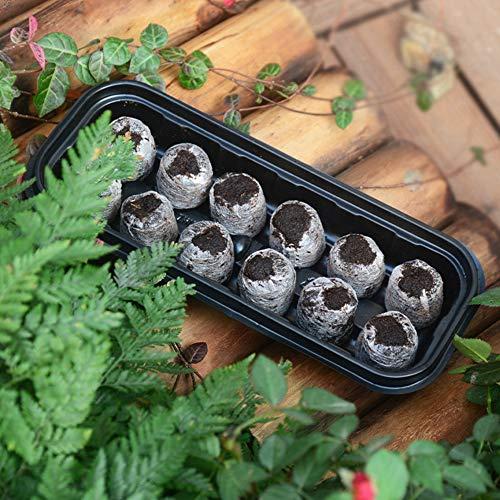 FHYT 24 pcs 30mm Pastillas Turba, Tabletas de Turba, Bandeja Semillero con Tacos de Turba, para El Cultivo de Esquejes y Plantas de Semilleros