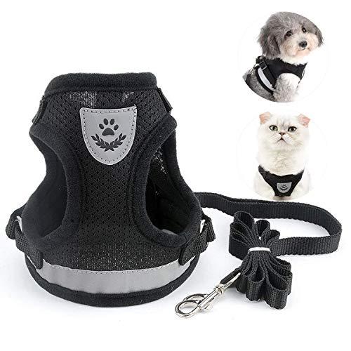 BOJLY Katzenleine mit Geschirr für Katzen für Spaziergang, Ultraleichtem Katzengeschirr, Katzenleine für Kleine Haustier Katze und Welpen