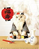 YISUMEI 60' x 80' Blanket Comfort Warmth Soft Plush Throw for Couch Sushi Cat Japanese Cute Funny Kitten
