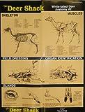 Deer Anatomy #2 Hunting Information Poster