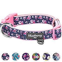 Padded Dog Collar, Matching Leash Harness Available Separately