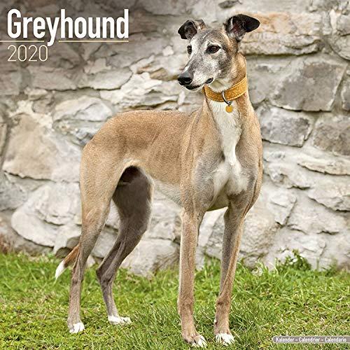 Greyhound Calendar 2020