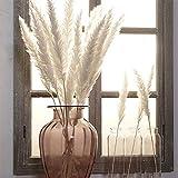 Venus Valink 15 Stück Binsenhalme, natürliches getrocknetes Pampagras, klein, Phragmites, künstliche Pflanzen, Blumenstrauß, Kunstblumen für Zuhause, Geschäft, Hochzeit, Party, Dekoration beige