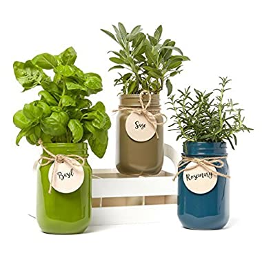 Modern Gourmet Foods 3-Pack Mason Jar 'Grow Your Own Herbs' Set by Contains Rosemary, Basil & Sage Seeds with Soil Pods