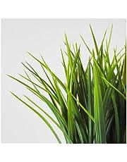 نبات زينة اصطناعي آنية, عشب
