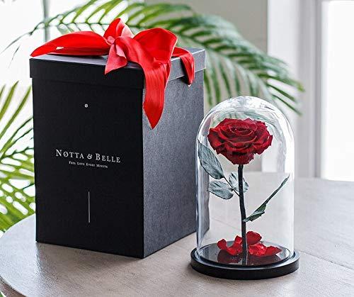 Rosa Eterna de cristal (roja, 27 cm), caja de regalo con efecto «wow», lujo «Bonita» de calidad de capullo de rosa, rosa La Bella y la Bestia estabilizada, idea de regalo original para San Valentín