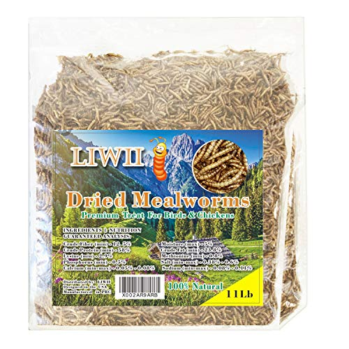 Dried Mealworms -11 LBS- 100% Natural Non GMO High Protein Mealworms - Bulk Mealworms for Wild Birds, Chicken Treats, Hamster Food, Gecko Food, Turtle Food,...