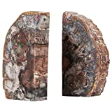 Tree Fossil Bookends Simple Decoración Natural Book Finaliza Forma Retro Bookshelf Book Stand for Libro Album DVD Wookend Supports