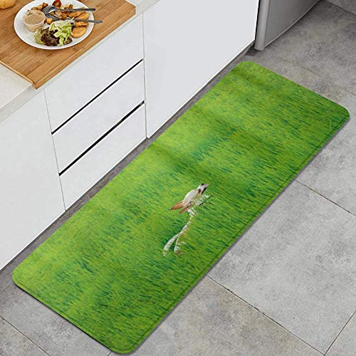 MIGAGA Kitchen Rug,Unique Playful Chihuahua Puppy Dog in The Grass Cute Animal Pet Best Friend,Non-Slip Kitchen Mat Rubber Backing Doormat Runner Rug Set and Bedroom Laundry Room Rugs