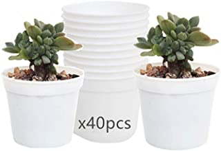 DODXIAOBEUL Round Succulents Plant Pots Drainage Hole, Set of 40 Mini Plant Pots 2.5