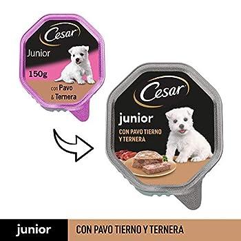 Cesar Junior Nourriture pour Chien, Chiot Puppy avec Tendre Dinde et Veau 150 g – 14 bacs