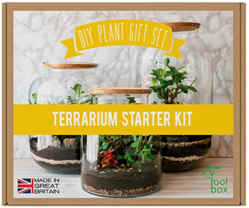 [CLEARANCE] RootBox™ Large Plant Terrarium Kit in scented giftbox   For Succulents, Bonsai, Fittonia, Cactus   Unique DIY GIFT for easter anniversaries birthdays employee/leaving work & lockdown