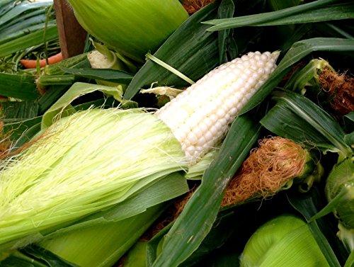 100 Country Gentleman Blanc Maïs sucré Zea Mays Graines de légumes d'antan
