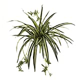 "Nearly Natural 6118-S4 23"" Spider Plant Bush (Set of 4), 4 Piece,Multi Color"