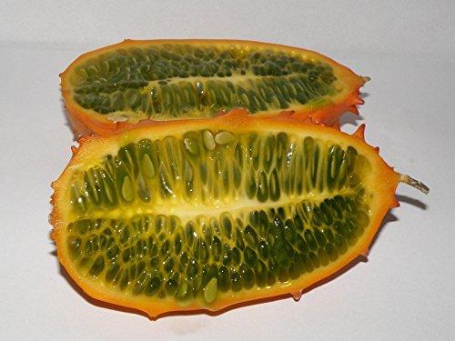 5 semillas de Cucumis metuliferus Seeds KIWANO cuernos de melón