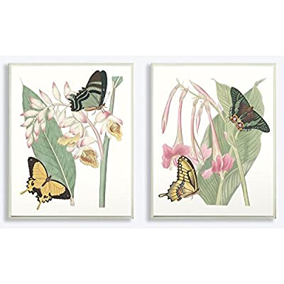 Stupell Industries Butterflies Plants and Flowers Illustration Canvas Wall Art