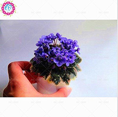 100pcs couleurs mélangées Mini Violet Graines, Graines violettes africaines, plantes Mini jardin Violet Fleurs vivaces herbes Matthiola Incana Seed 4
