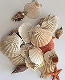 hibuy Muscheln gemischt, Muschelsortiment zum Dekorieren und Basteln, Muschel Sortiment, ca 25 Teile Muschelmix