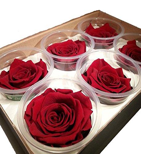 Decoflorales® - Echte, auf Glycerinbasis konservierte Rosenköpfe; Farbe rot; 6 Stück