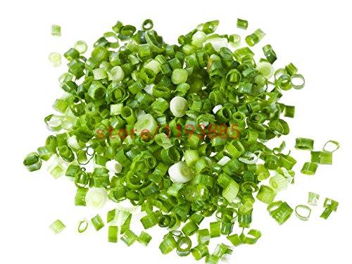 100 pcs Oignon Seeds Green Spring Onion Vegetable des variétés végétales Fresh Food bonsaï pour la maison jardin
