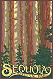 Sequoia National Park, California, Forest View (9x12 Art Print, Wall Decor Travel Poster)