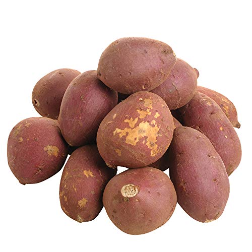 """丸和商店 <加工用・規格外品> 千葉県産 シルクスイート 10kg / -Imperfect Produce- Sweet Potato, """"Silk Sweet"""", 10kg"""