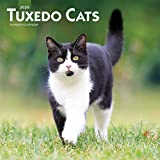Tuxedo Cats 2020 12 x 12 Inch Monthly Square Wall Calendar, Animals Cats