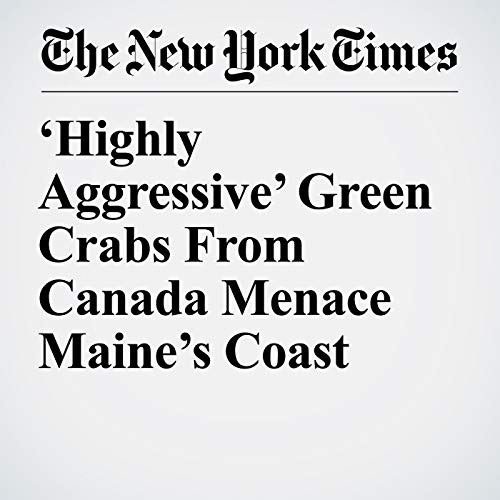 'Highly Aggressive' Green Crabs From Canada Menace Maine's Coast audiobook cover art