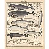 Meishe Art Poster Kunstdrucke Plakatdruck Wale Geschichte