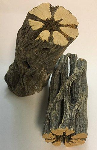 catappa-leaves Natur Deko für Aquarien und Terrarien 2 Stücke Cholla Kaktus Holz ~35mm Ø x 80mm lang