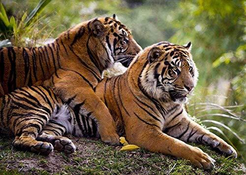 tijger knuffel ikea