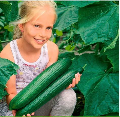 Beautytalk-Garten 30 Stück Salatgurke Gemüsesamen Freilandgurken Saat Chinese snake mehrjährig für Hausgarten