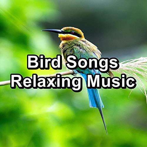 Spa Relax Music, Spa Music & Spa