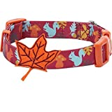 Blueberry Pet 8 Patterns Thanksgiving Fall Fun Enchanting Squirrel Designer Adjustable Dog Collar with Maple, Small, Neck 12'-16'