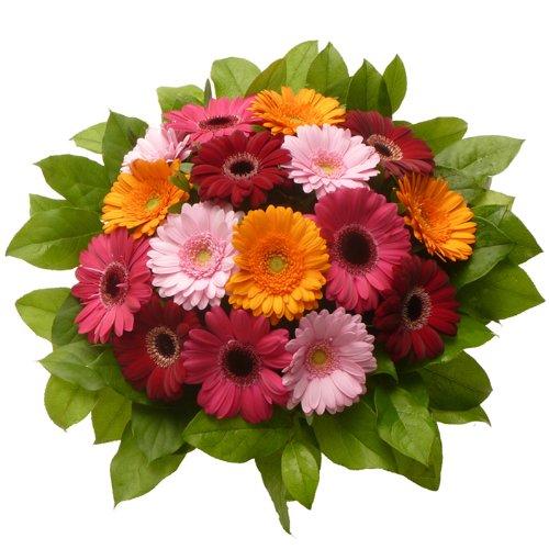 Blumenversand vom Besten! - Blumenstrauß - zum Geburtstag - Farbpracht - mit 16 bunten Mini-Gerbera - Deutschlandweit verschicken