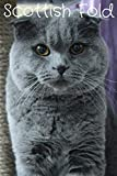 Scottish Fold: Journal and Notebook - Composition Size (6