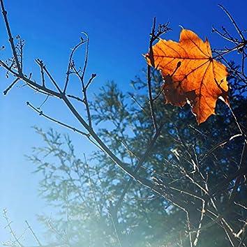Long awaited solstice (feat. Early Garden)