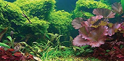 "SPORN Aquarium Background, Static Cling, Tropical, 24"" x 12"""