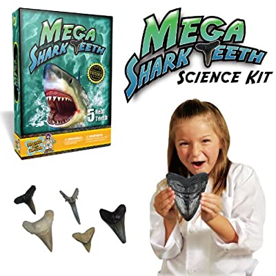 Discover with Dr. Cool Mega Shark Teeth Kit – Includes 5 Real Shark Teeth and a Large Megalodon Tooth Replica!