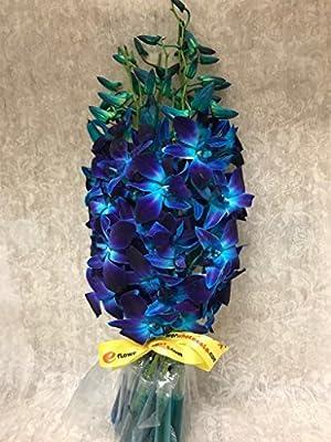 Premium Cut Blue Orchids (10 Stems Orchid) by Eflowerwholesale