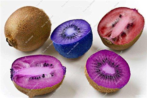 Rare semences Allemagne Bonsai usine Juicy non-OGM Tropical Fruit Multi Color Actinidia semences des plantes ornementales en plein air 50 Pcs 13