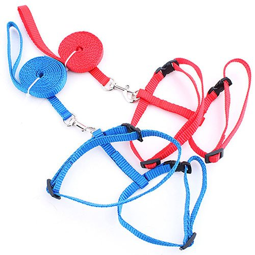 Lil Lion 2 Pack Cat Leash Harness with Adjustable Nylon Collar in H Style One Size Fits All Animals Red Blue