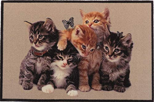 oKu-Tex Design Fußmatte Schmutzfangmatte Katzen Kätzchen Kitten, lustiges & niedliches Motiv, rutschfest & waschbar, Deko Dekorativ, beige, 50 x 80 cm